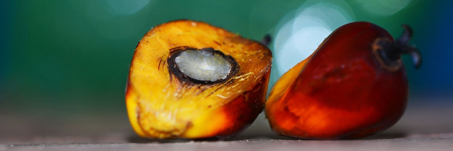 Palm Fruit for extracting palm kernel oil